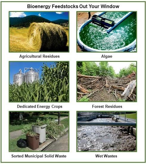 Bioenergy Feedstocks