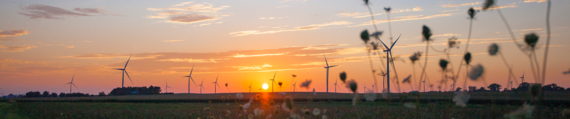 Sunset with a wind farm and field.