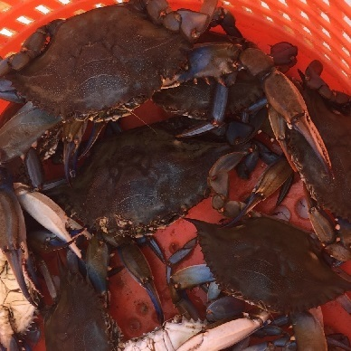 crabs in red basket