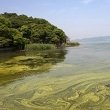algal bloom in lake