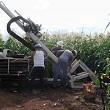 team of scientists installing sensor in corn field