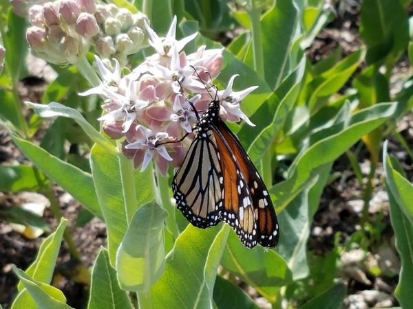 It's National Pollinator Week!