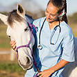 Veterinarian and horse