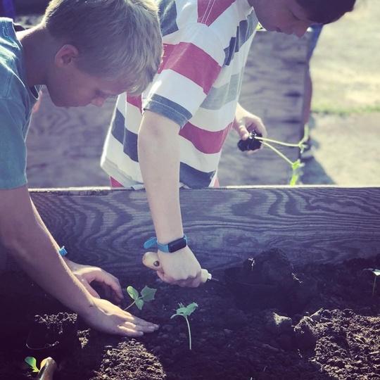 Boys plant vegetables in raised garden beds