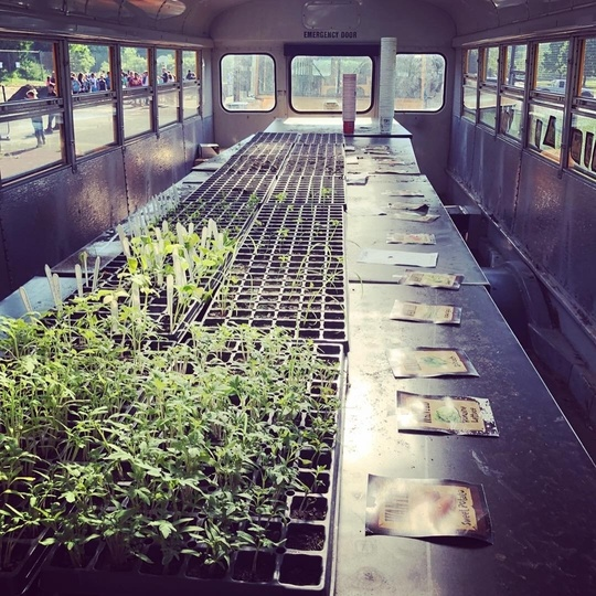 Image of an inside of a school bus that has been transformed into a mobile garden