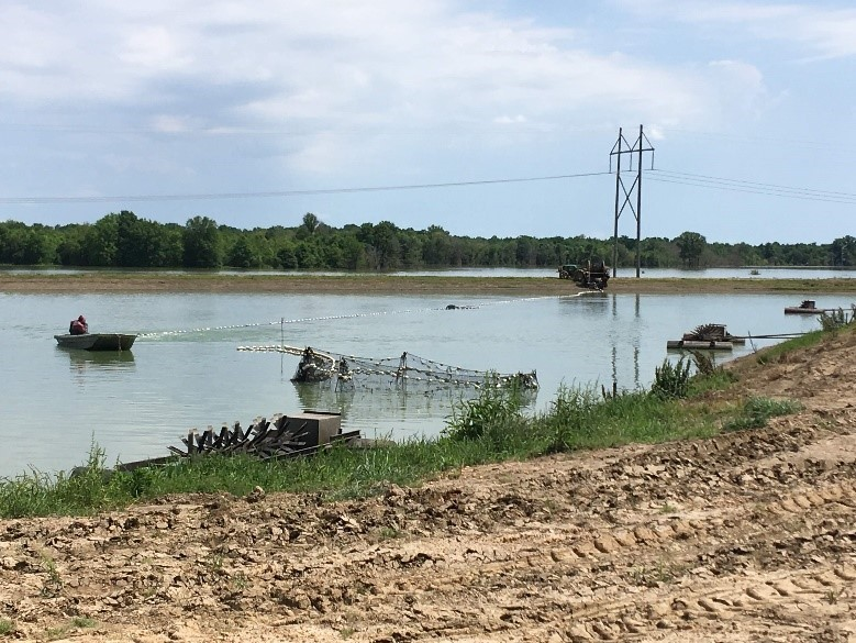 Catfish Harvesting