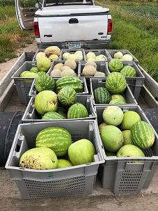 West Fargo Public Schools Melon Harvest