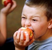 Boy crunches into a local apple