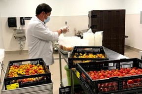 Preparing tomatoes for bulk meals