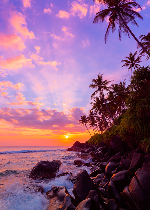 Rocky tropical shoreline with waves crashing, palm trees leaning, and a colorful sunrise or sunset.