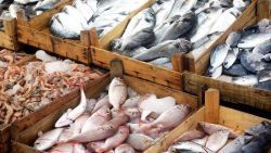 Photo of a variety of fish for sale at a fish market