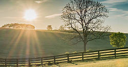 rural scene - sunrise over a field