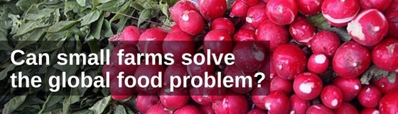 "Radishes and leafy green vegetables in the background with text ""Can small farms solve the global food problem?"""