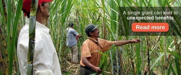 three men harvesting sugar cane in peru with a call to action to read more