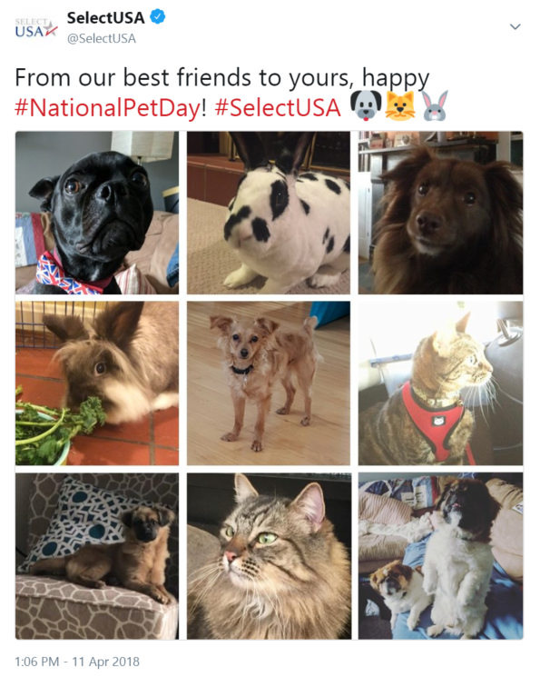 From our best friends to yours, happy #NationalPetDay! #SelectUSA 🐶🐱🐰
