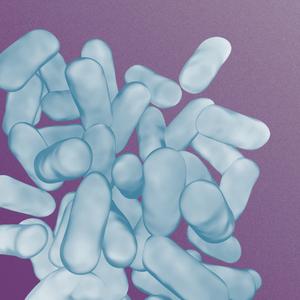 Lactobacillus Bacteria Probiotic