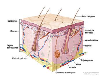Prevención de cáncer de piel