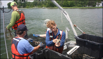Oyster Reef Ecosystem Services from report