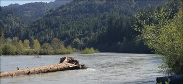 California woody debris