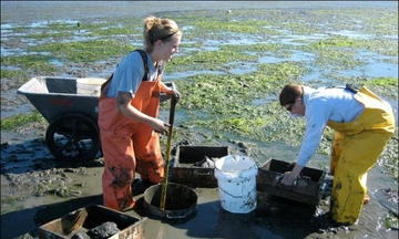 Burrowing Shrimp Research