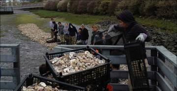 SoCal Oyster Restoration
