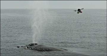 Hexacopter Whale Blow