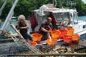 Cleaning and bagging oysters raised in Maine's Damariscotta River.
