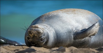 Monk Seal Photo Contest Winner