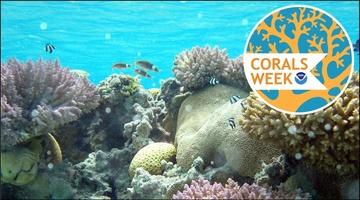 Corals Week 2017