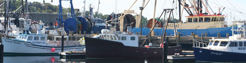 harbor banner