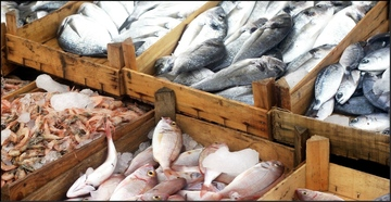 Seafood Imports