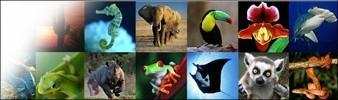 CITES Header Images