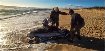 Marine Mammal Stranding Response