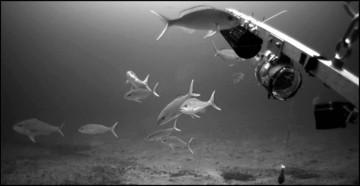 Deep 7 Bottomfish