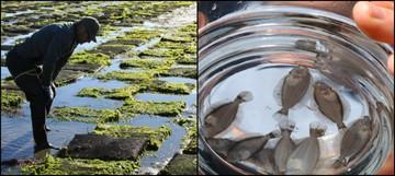Aquaculture Collage 2