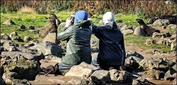 Northern Fur Seal fieldwork