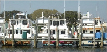 Red snapper charter vessels