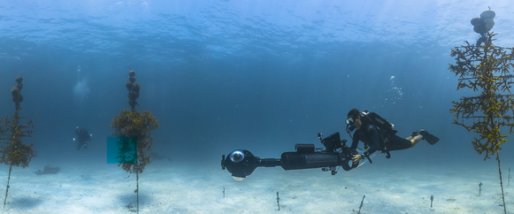 A diver with a large underwater camera swims through a coral restoration nursery.