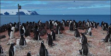 Antarctic cameras