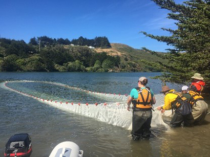 Sonoma County Water Agency fish seining