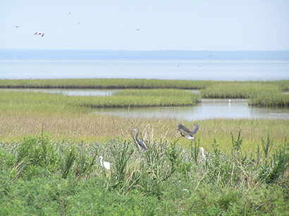 gulf of mexico wetlands
