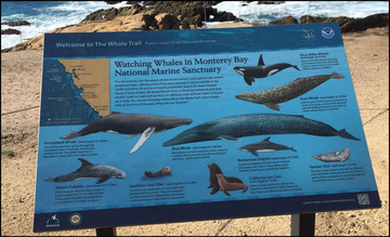 Whale informational sign