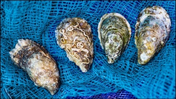 Shellfish Initiative