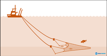 Bottom Trawl Gear Diagram