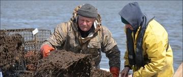 Removing crab traps