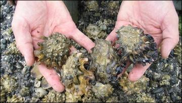 shellfish in hand