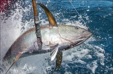 Oceanic fish restoration