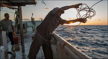 Tuna Swordfish Restoration