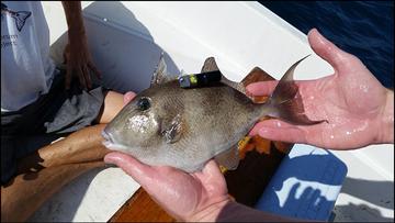hurricane fish 3