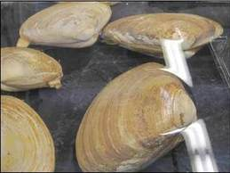 Shellfish, NOAA Fisheries